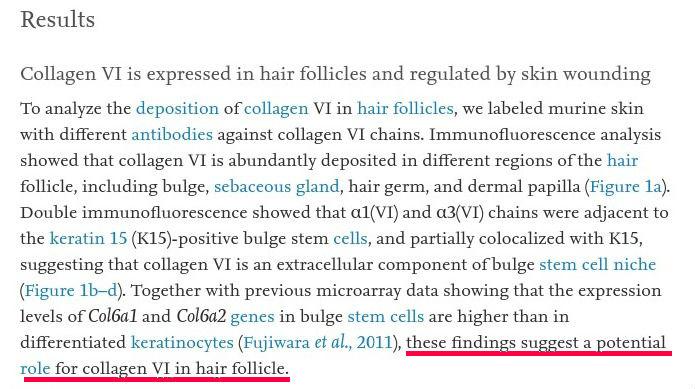 collagen-for-hair-collagen 6